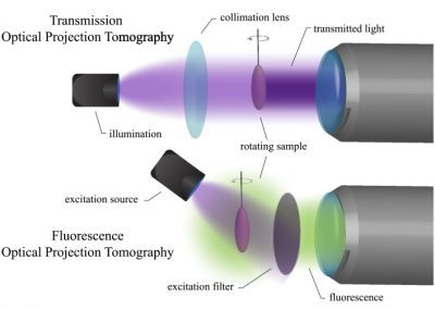 Recent advances in optical tomography in low scattering media